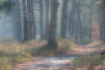 Promenade dans la forêt le matin