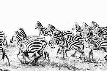 Rennende zebra's in zwart wit van Krijn van der Giessen