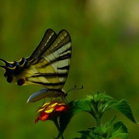 Butterfly oil paint von Loraine van der Sande