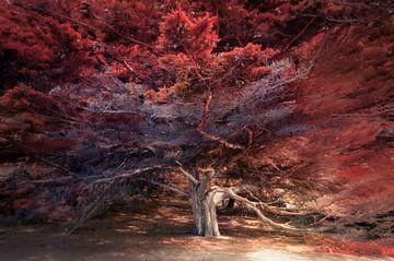 Schilderachtige cypress boom van Rob Visser