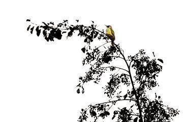 Groene specht in de top van de boom van Jessica Berendsen