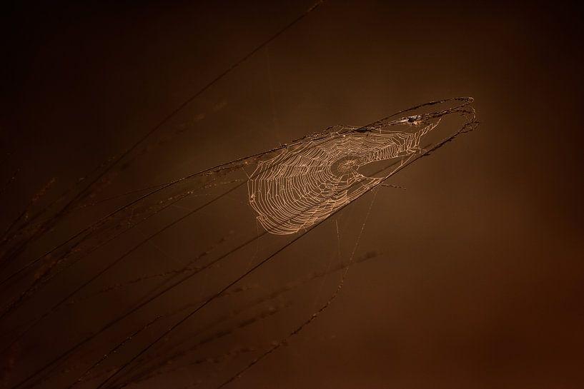 Spinneweb bij zonsopkomst van Ruud Peters
