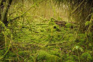 Mos bos #3 van