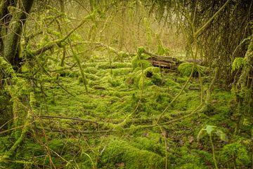 Mos bos #3 von Xander Haenen