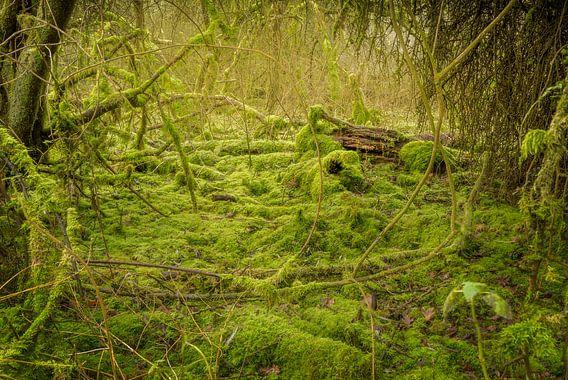 Mos bos #3 van Xander Haenen