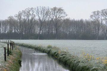 ruisseau d'hiver sur Tania Perneel