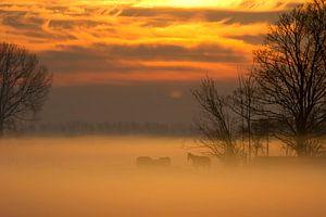Paarden in de mist bij zonsopkomst van