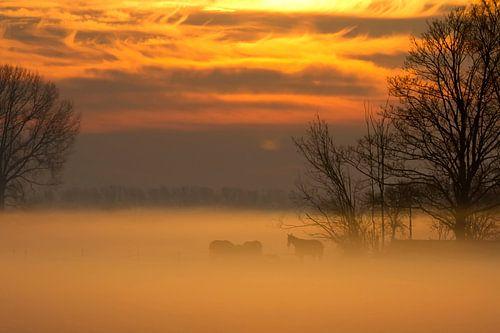 Paarden in de mist bij zonsopkomst von fotogevoel .nl