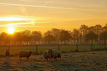 Schafherde vor der aufgehenden Sonne van Anja Uhlemeyer-Wrona