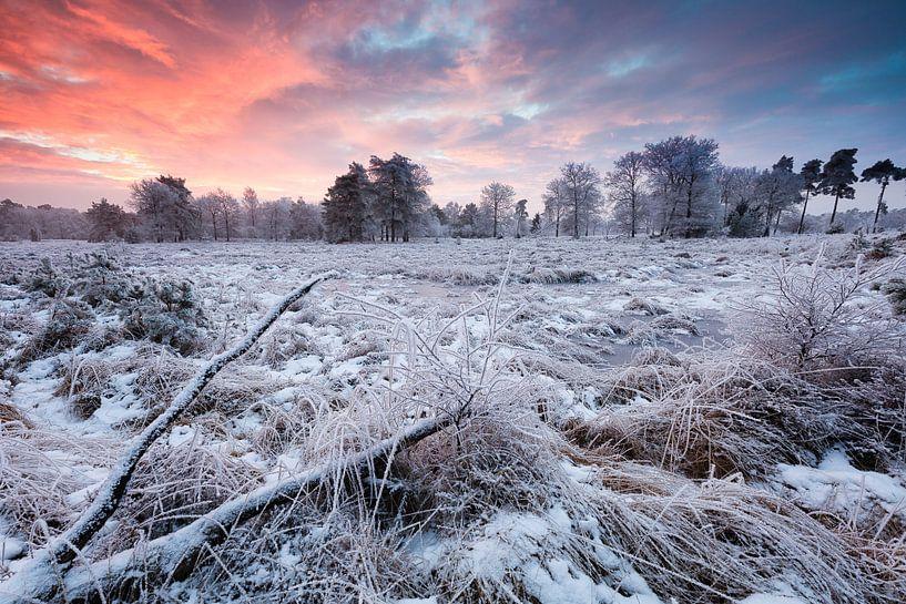 Dwingelderveld Nationaal park in Drenthe in de winter met sneeuw en een mooie avondrode lucht van Bas Meelker
