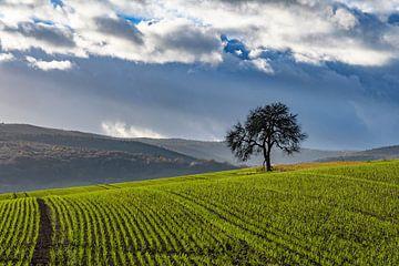 der Baum van Heinz Grates