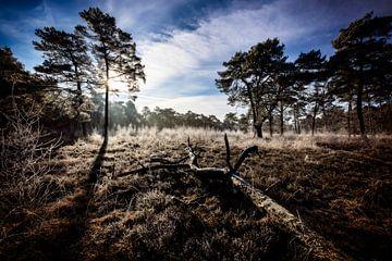 Roden Mensingebos, Heidelandschaft an einem Wintermorgen von Arjan Boer