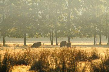 Schottische Highlander im Nebel von Steven Langewouters