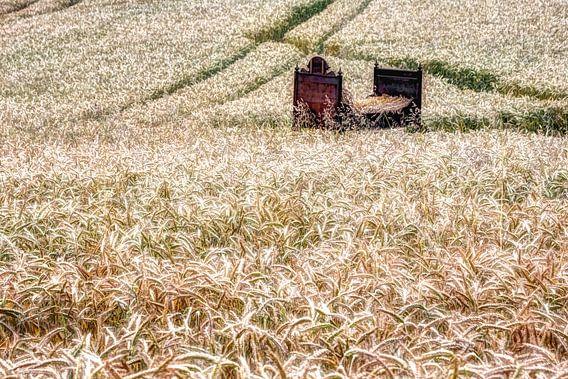 bed in het korenveld