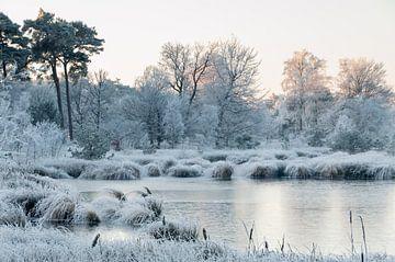 winter sur eric brouwer