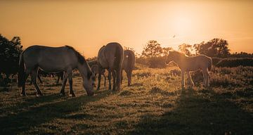Paarden bij zonsondergang van Alvin Aarnoutse