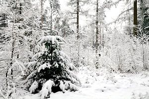 Dennenboom in de sneeuw