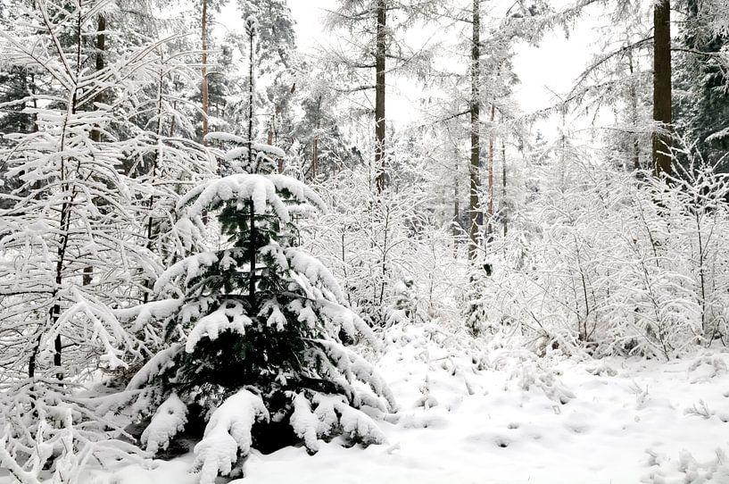 Dennenboom in de sneeuw van Sjoerd van der Wal