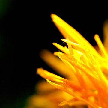 Sunburst von Freya Colman