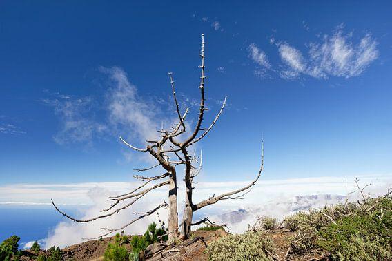 Bergkamm mit vertrocknetem Baum