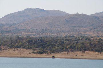 Olifant / Elephant, Pilanesberg, Zuid-Afrika von Maurits Bredius