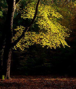 Blätter von Eelke Brandsma