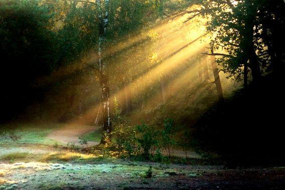 Bos met strijklicht.