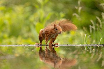 Écureuil, je dois être là, mais comment ?