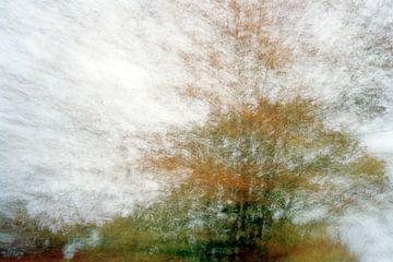 Ovifat, België von Christiaan Krouwels