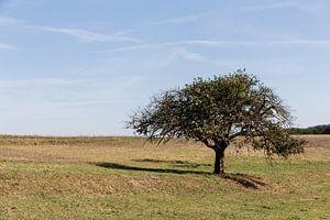 Landschap in Lof, Duitsland met boom op voorgrond van