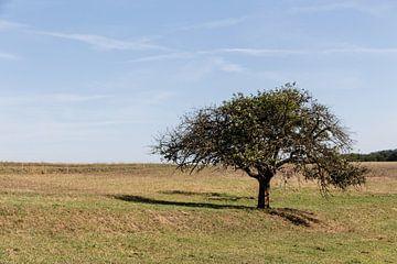 Landschap in Lof, Duitsland met boom op voorgrond