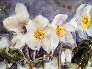 rose de Noël sur Christine Nöhmeier