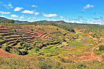 Rijstvelden  in Madagaskar van Esther van der Linden