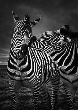 Zebra Küste Zebra von Chihong