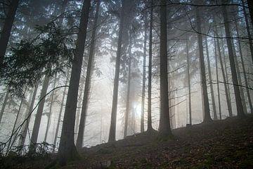 Wald im Morgenlicht von Jens Hertel