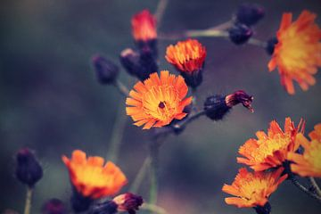 Vintage flowers van Malte Pott