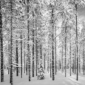 Door de bomen het bos, zwart wit, Finland van Rietje Bulthuis