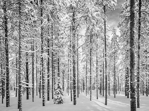 Door de bomen het bos, zwart wit, Finland