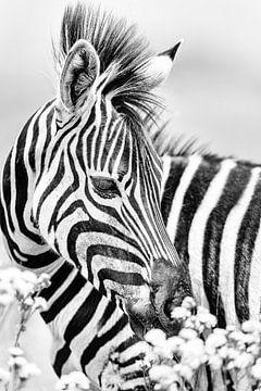 Zebra met bloemen in zwart wit van De Afrika Specialist