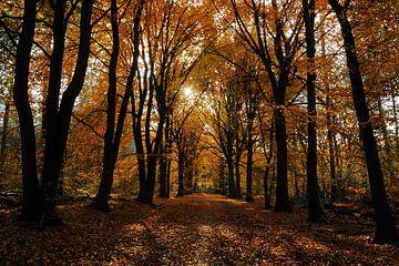 Zonnig herfstbos  van Gonnie van de Schans
