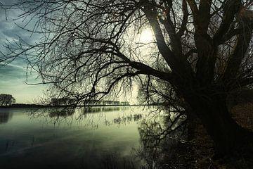 Bison-Bucht von jowan iven