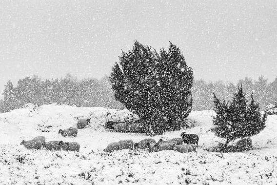 Schaapskudde in sneeuwbui van Karla Leeftink