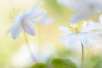 spring is in the air von jowan iven
