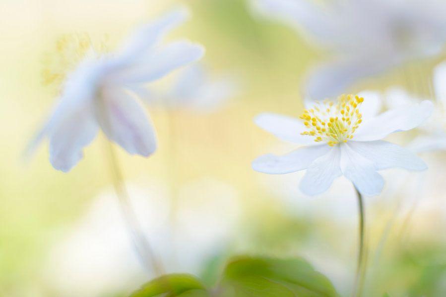 spring is in the air van jowan iven