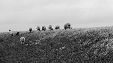 Weidende Schafe - Wert von Maurice Weststrate