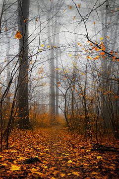 Geel en grijs - herfstbos in de mist van Dirk Wüstenhagen