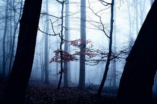 Mystischer Wald 015 van Oliver Henze