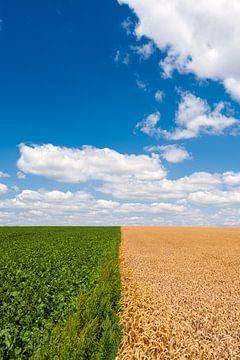 Landbouwgrond sur