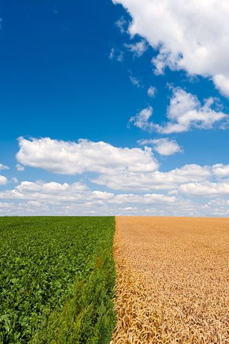 Landbouwgrond van Wim Slootweg