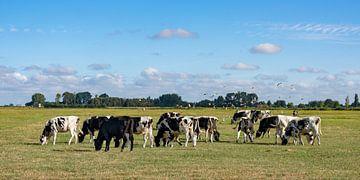Koeien met meeuwen van Peter Roovers